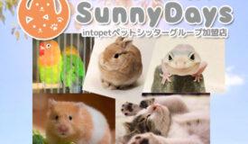 ペットシッター SunnyDays(朝霞・志木・和光・新座ほか)